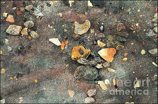 Seashells And Stones by Kathleen Struckle