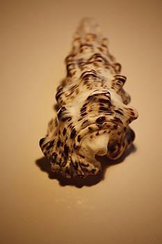 Seashells by Julian Bralley