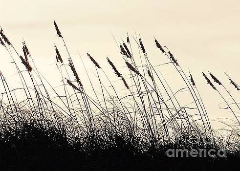 Seaside Oats by Joy Hardee