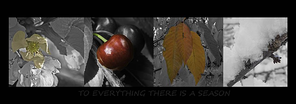 Seasons by Judi Baker