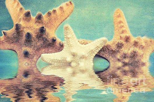 Angela Doelling AD DESIGN Photo and PhotoArt - Seastars