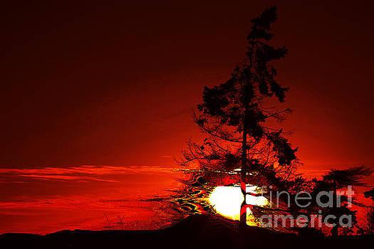 Sechelt Tree 3 by Elaine Hunter