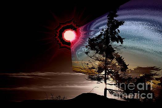 Sechelt Tree Stardust by Elaine Hunter