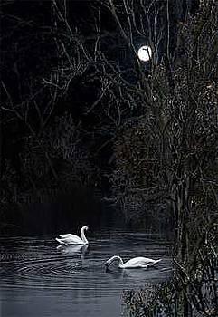 Secret Place by Willa Davis