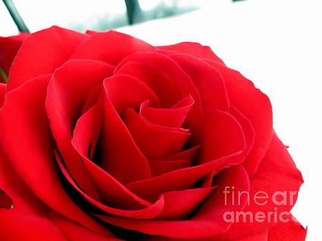Secret Valentine by Jaunine Roberts