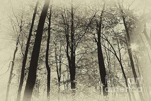 Secrets of the Forest by Karen Adams