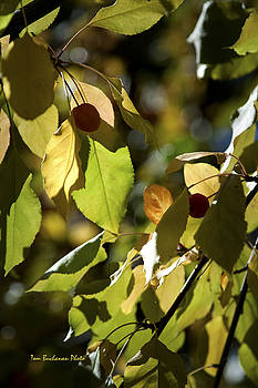 Seed Pods in the Fall by Tom Buchanan