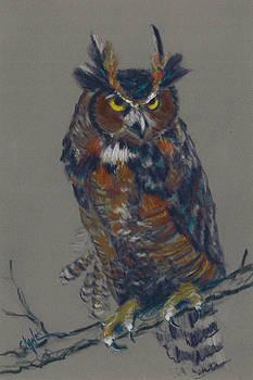 Seeking Owl  by Christine Camp