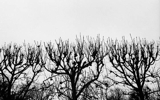 Seine River Trees by Tamarra Tamarra