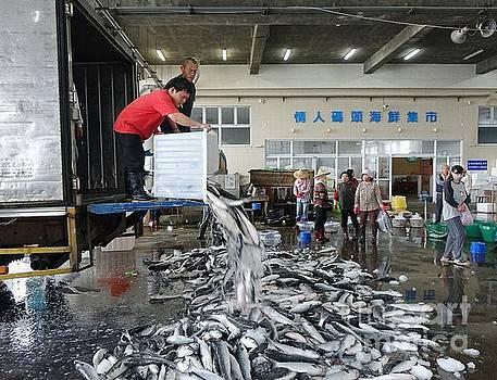 Selling Grey Mullet Fish in Taiwan by Yali Shi