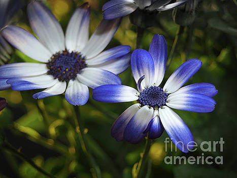 Senetti On A Warm Spring Day by Dorothy Lee