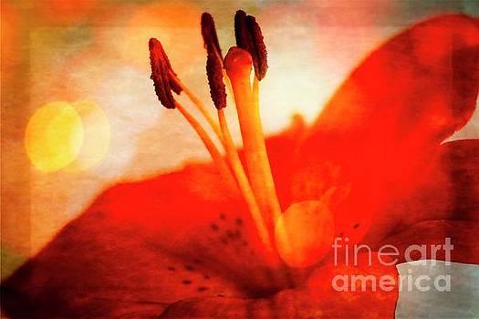 Sensations Floral Contemporary Art #702 by Ella Kaye Dickey