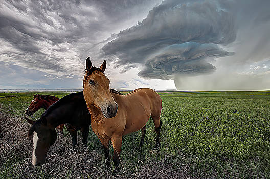 Sensing the Storm by Zach  Roberts
