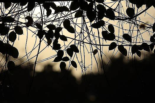 Sentimental by  Janet Pancho Gupta