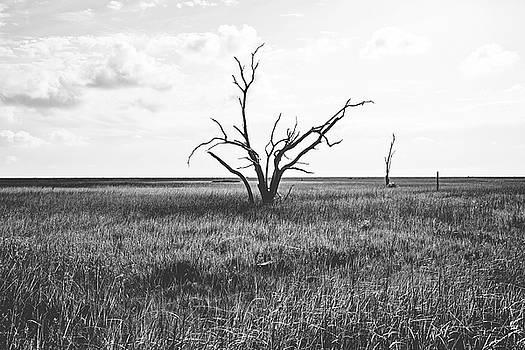 Sentinel of the Marsh by Scott Pellegrin