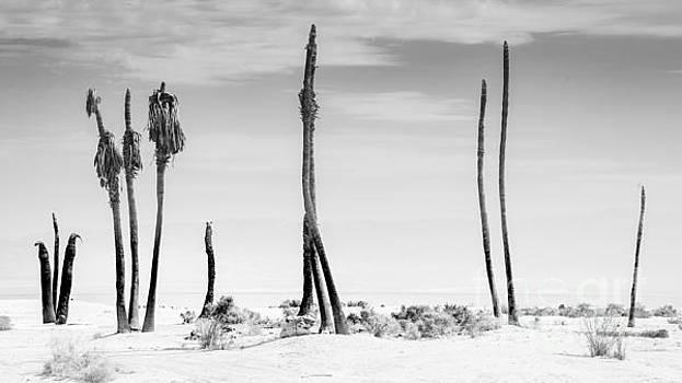Sentinels of the Salton Sea by Jim DeLillo