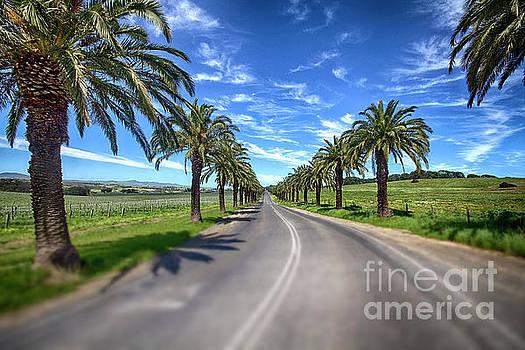 Seppeltsfield winery road by Douglas Barnard
