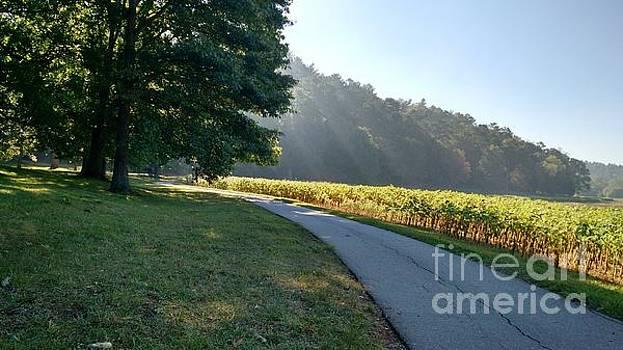 September Morning Walk by Anita Adams