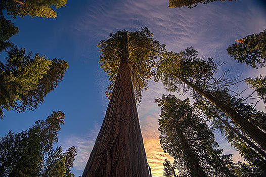 Sequoia Sunrise by Phil Abrams