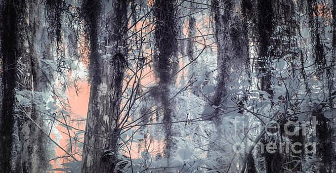 Richard Smukler - Serenade