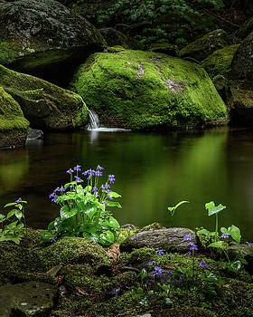 Serene Green by Bill Wakeley