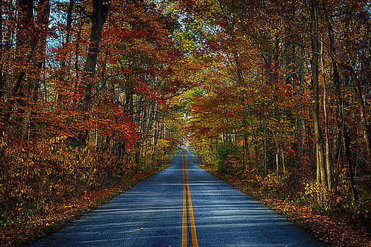Serene Trail by Jerome Lynch