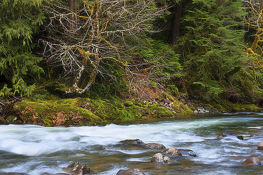 Serenity Along the Salmon River by Dee Browning