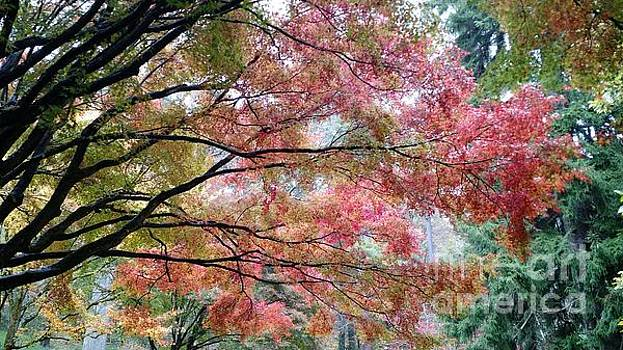 Serenity Autumn Morning by Anita Adams