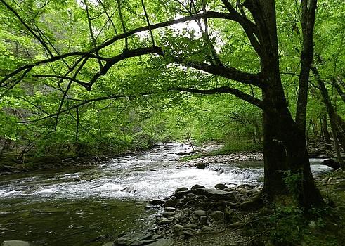 Tennessee Mountain stream by Deborah Cummins