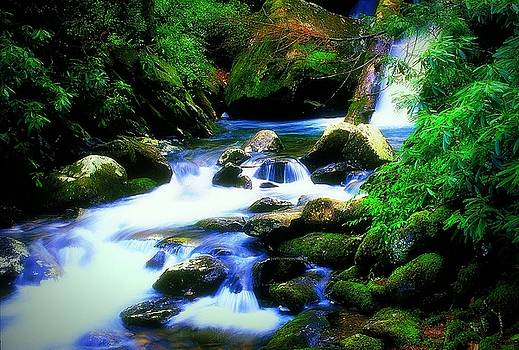 Serenity by Rodney Williams