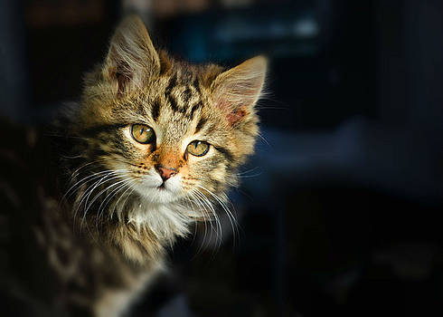 Serious cat portrait by Rumiana Nikolova