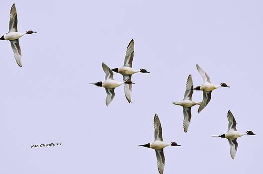 Kae Cheatham - Seven Ducks on High