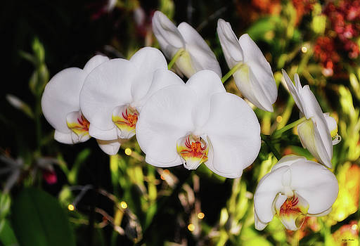 Seven White Orchids 001 by George Bostian