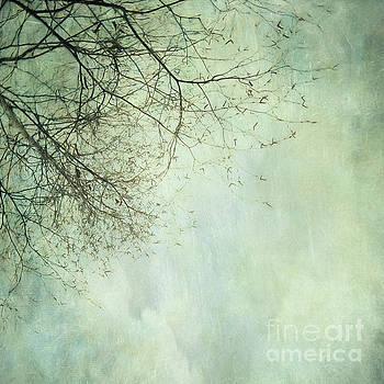 Limbs of a tree  by Priska Wettstein