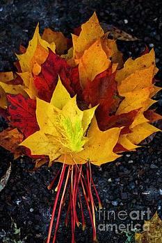 Shade of Autumn  by Gary Bridger