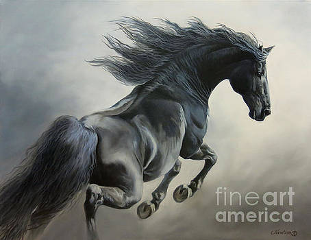 Shades Of Gray by Jeanne Newton Schoborg