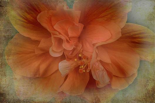 Shades of Orange by Judy Hall-Folde