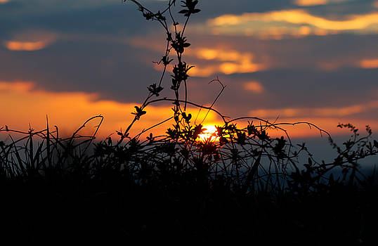 Shades of Sun by Everett Houser