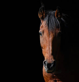Shadow Horse by Robert Goulet