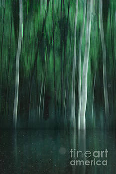 Shadow In The Woods by K Hines