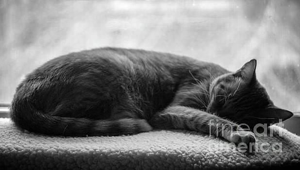 Shadow Nap  by JW Hanley