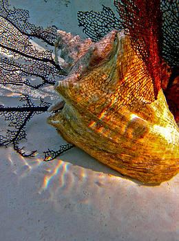 Shadow on the Shell by Barbara Kelley