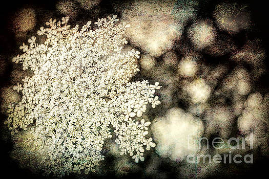 Shadows and Lace by Lynn Sprowl