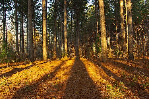 Shadows in Forrest  by Zalman Latzkovich