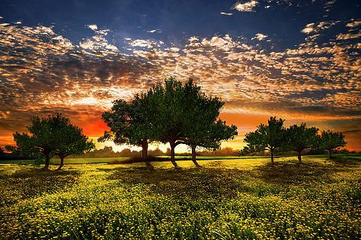 Shadows in the Meadow by Debra and Dave Vanderlaan