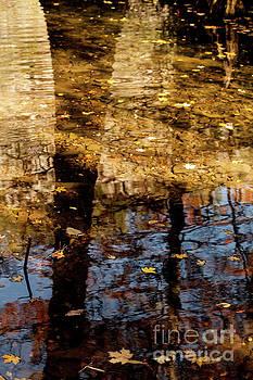 Shadows of Cypress by Iris Greenwell