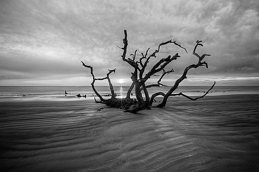 Debra and Dave Vanderlaan - Shadows on Driftwood Beach Black and White