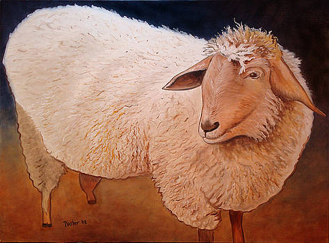 Shaggy Sheep by Scott Plaster