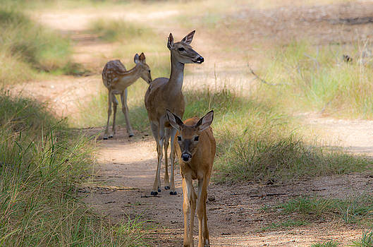 Sharing The Trail by Bob Marquis