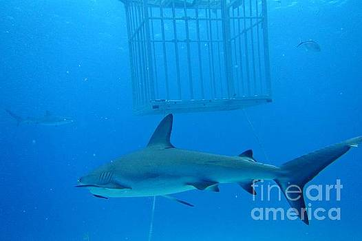 John Malone - Sharks and Cage